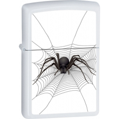 26652 Spider in Web